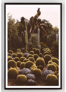 California Cactus photograph