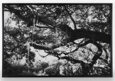 Southern Landscape Photograph