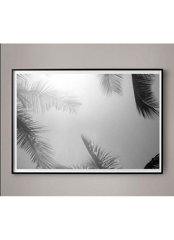 Palm Frames 2