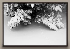 Snow on Trees Photograph