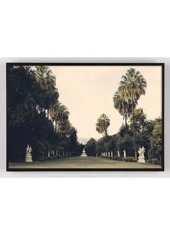 california palm tree photograph