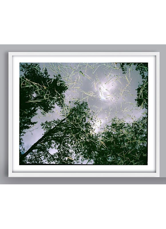 reflection of trees photograph