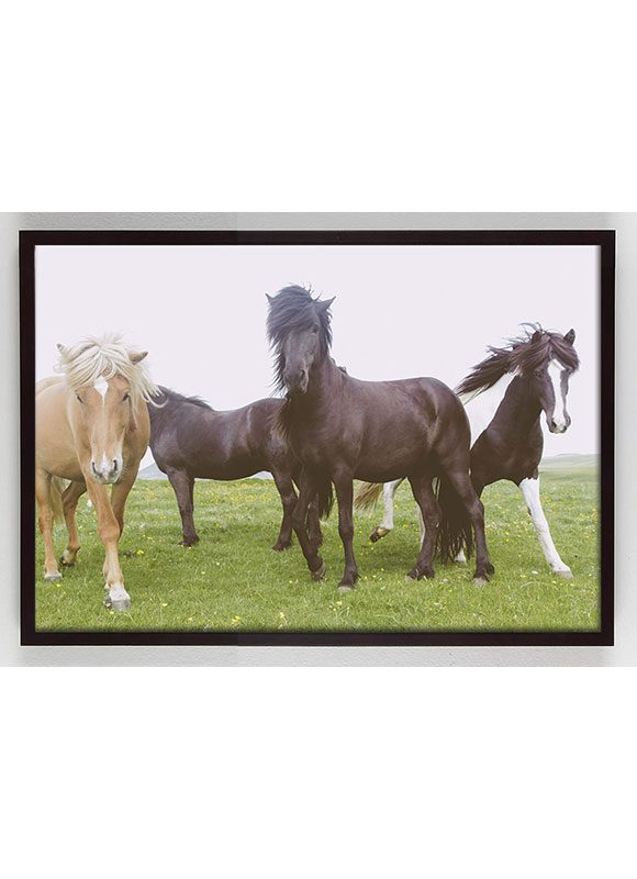 photograph of group of horses