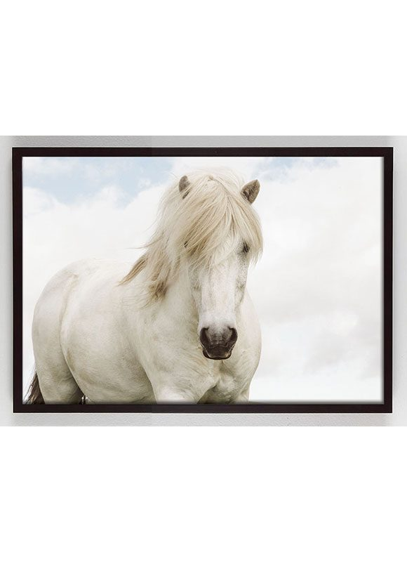 white horse photo