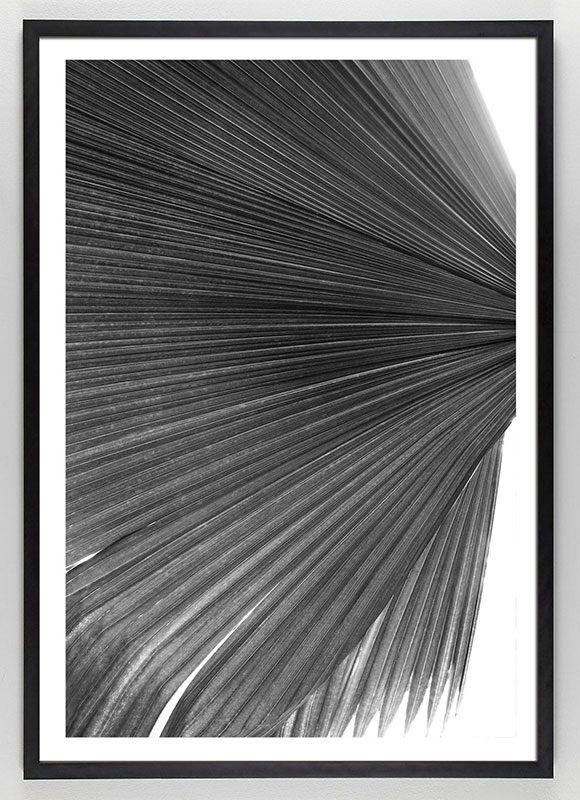 Black and White Palm Frond Art