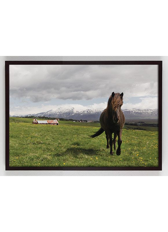 brown horse in field photography