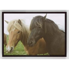 two horses photography wall art