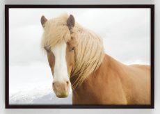 golden horse photograph wall art