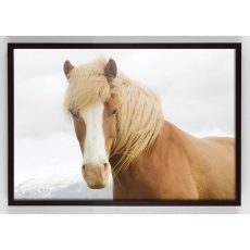 golden horse photograph wall art