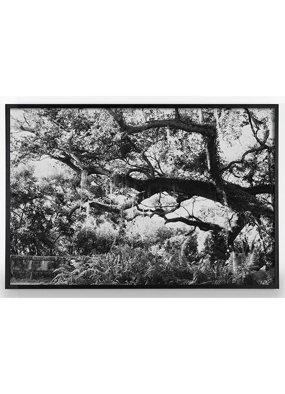 American South Black and white Photograph
