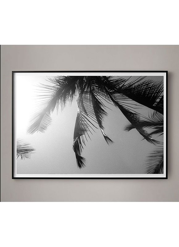 black and white palm photograph